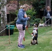 30th Sep 2018 - Dog agility at the Hospice