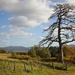 The Aul' tree and Clachnaben by jamibann