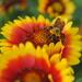 Orange October 2018 - Busy Pollinating by genealogygenie