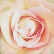 3rd Oct 2018 - Ero flower