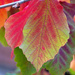 Autumn Leaves by seattlite