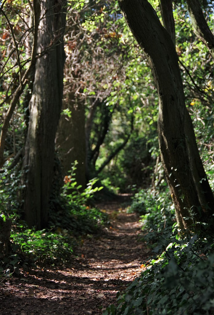 Follow The Path Into The Woods by 30pics4jackiesdiamond