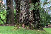 3rd Oct 2018 - Tree trunks