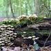 Autumn wood.  by pyrrhula