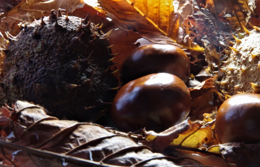 Anyone For A Game Of Conkers?? by 30pics4jackiesdiamond