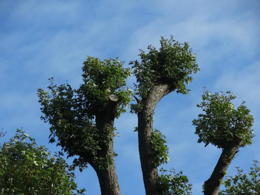 tree tops by gijsje