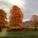 A touch of Autumn by ellida
