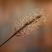 Dewdrops on a Stick by milaniet