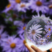 Flowers in the Sphere by gq