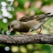 BIRD ON A BRANCH -TWO
