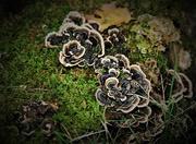 5th Oct 2018 - Fungus