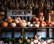 6th Oct 2018 - Pumpkin Patch