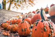 7th Oct 2018 - Pumpkin Varieties