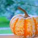 Little Gourd