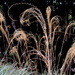 Dry grasses by 777margo