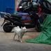 Street Dog at Beijing