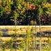 Duck hunting season in Nova Scotia