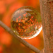 Look into my crystal ball and you'll see fall! by fayefaye