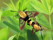 19th Jul 2018 - Makin' more moths…
