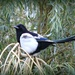 One For Sorrow.
