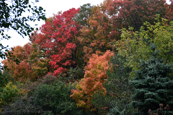 leaves that are green by summerfield