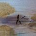 White  Oak plank...