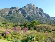 9th Oct 2018 - Kirstenbosch Botanical Garden
