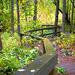 Treed Pathway