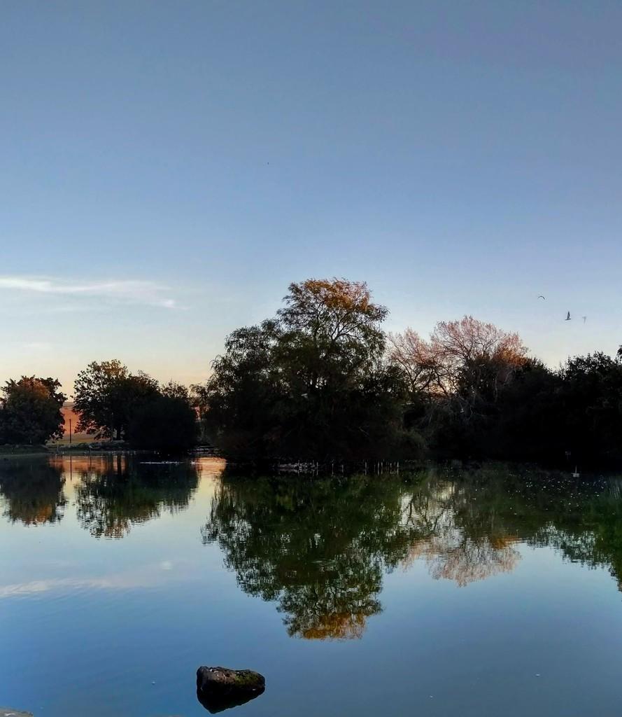 Falmer Pond by 4rky