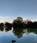 9th Oct 2018 - Falmer Pond