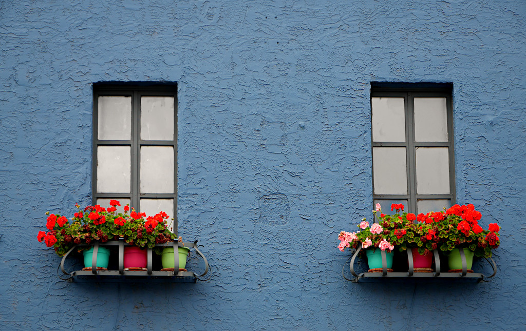 Window Flowers  by gq