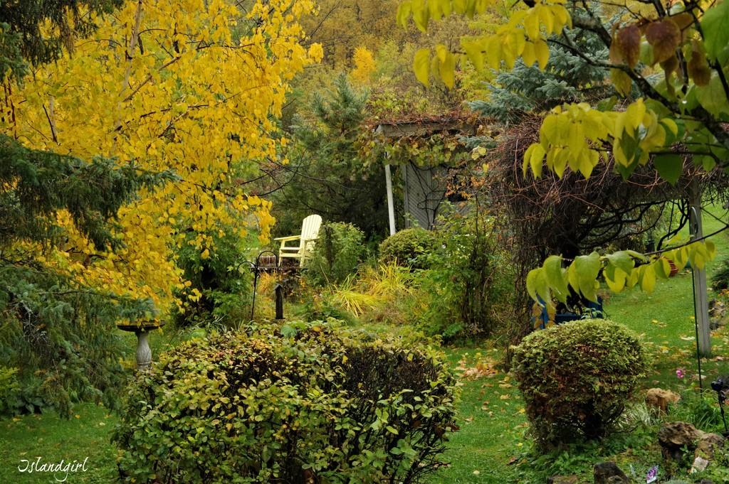 My Backyard Fall Colour  by radiogirl