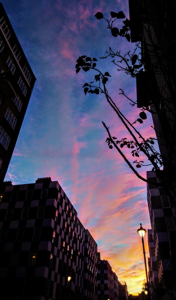 Evening glory by boxplayer