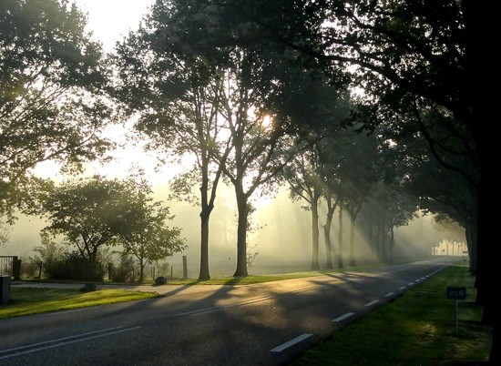 misty morning by gijsje