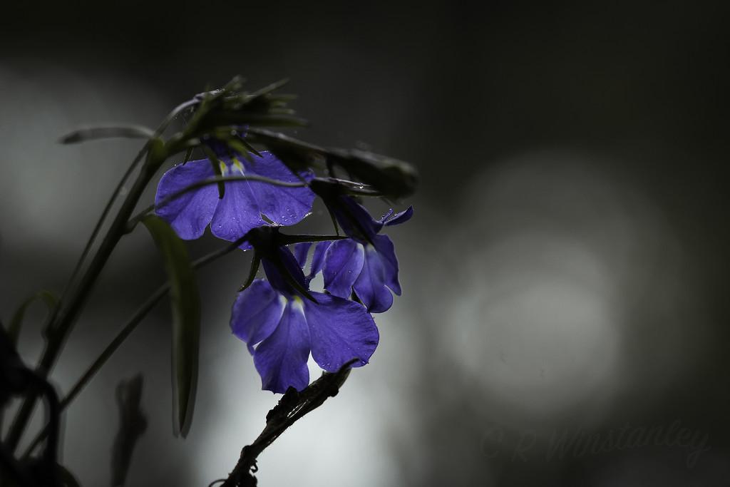 """""""In joy or sadness flowers are our constant friends"""".  Okakura Kakuz_ by kipper1951"""