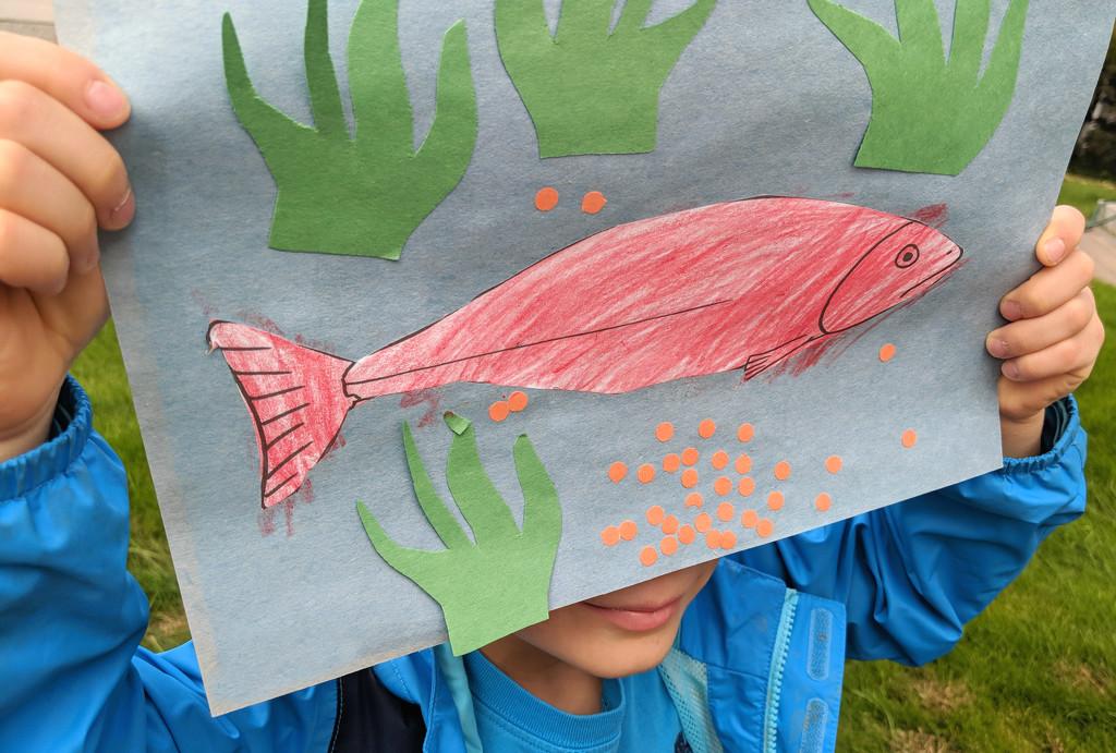 Salmon  by gq