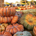 Pumpkins, Pumpkins, and more Pumpkins