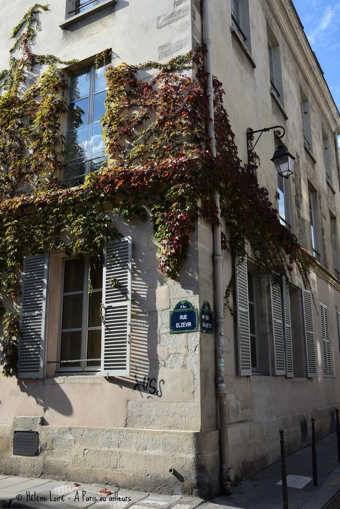Autumn in Paris  by parisouailleurs