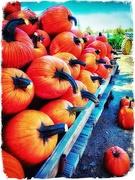 12th Oct 2018 - Pumpkin Pumpkins