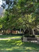 14th Aug 2018 - UCLA Sculpture Garden