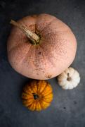 11th Oct 2018 - Pumpkin Portraits