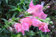 11th Oct 2018 - Wet flowers and bugs