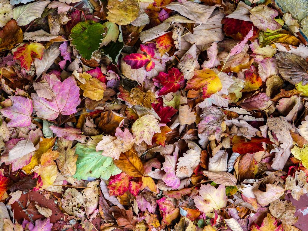 Winter Leaves by billyboy
