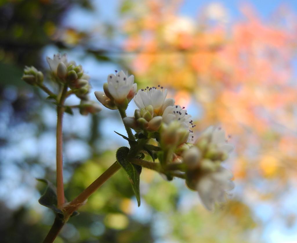 in my garden by marijbar