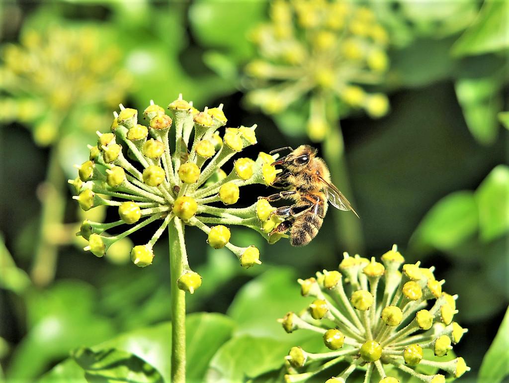 Still buzzing about! by bigmxx