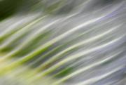 12th Oct 2018 - ICM Cabbage Leaf