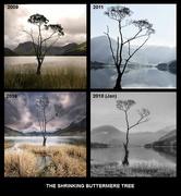 13th Oct 2018 - Tree collage