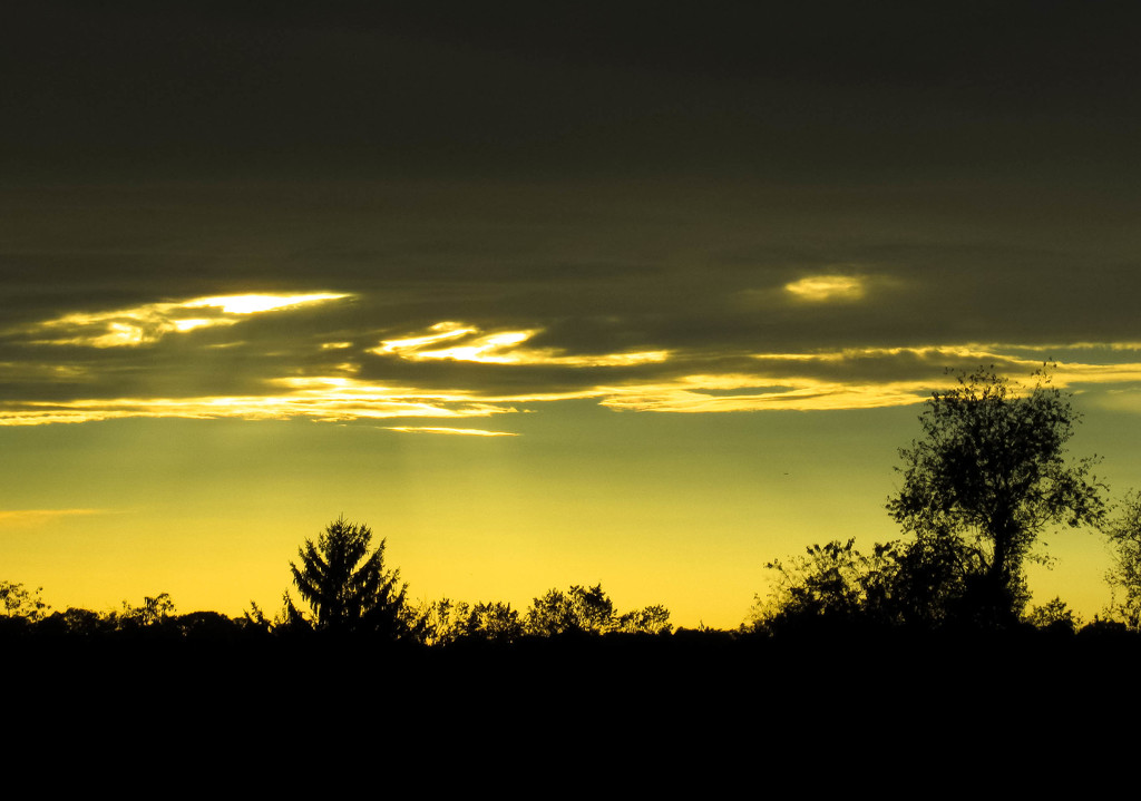 Sky of gold by mittens