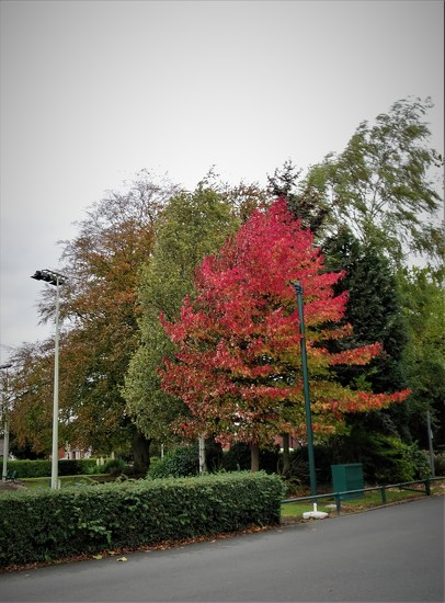 Colour in the Park  by beryl