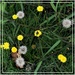 Pretty Weeds ~